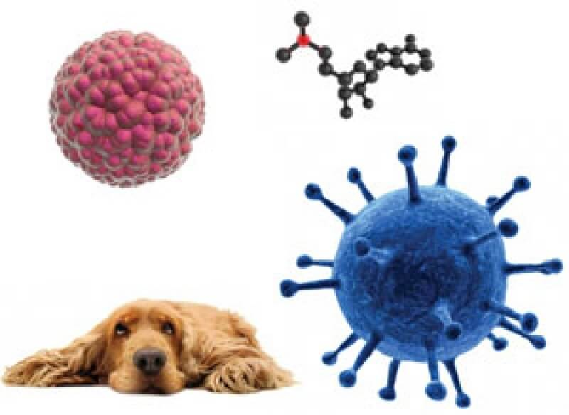 Stem Cell Therapy For Pets At Maybeck Animal Hospital